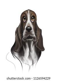 Dog, Basset Hound, Puppy. Hand drawn original  illustration of a basset hound dog.