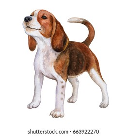 狗小猎犬隔离在白色背景. 开朗的棕色狗。 水彩。 插图。 模板。