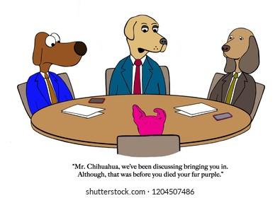 Dog boss hesitates to hire purple Chihuahua