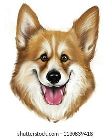 Dog, Corgi Hound. Hand drawn digital illustration of a dog. T-shirt design.