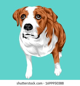 Dog pets Illustration for background and bussiness icon pets