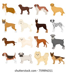 Dog, pooch, breed, and other web icon in cartoon style.Dalmatian, shepherd, terrier, icons in set collection.