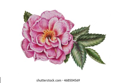 Dog rose watercolor painting cards. Hand drawn pink garden flowers for wedding decoration, vignette and invitations. Botanical wallpaper.
