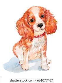 dog Spaniel.illustration watercolor