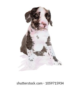 Dog Watercolor painting. Great Dane Dog Watercolor hand painted cute animal illustrations.