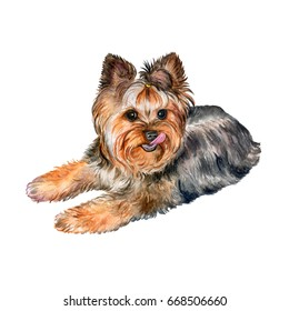 Dog Yorkshire Terrier Isolated on a White Background. Watercolor. Illustration. Picture. Image