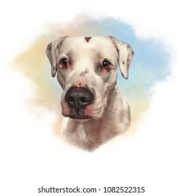 Dogo Argentino. Cute head of white dog for print on pillow, T-shirt, card. Drawing in realistic style. Portrait dog, hand drawing illustration. Watercolor Animal collection: Dogs. Art background