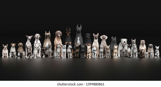 Dogs and Cats all pets sitting together front view black floor 3d rendering