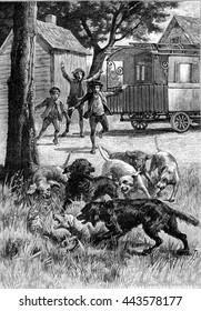 Dogs fighting. From Jules Verne Cesar Cascabel, vintage engraving, 1890.