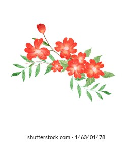 Dogwood flower hand drawn in watercolor illustration in white background.Botanical illustration.