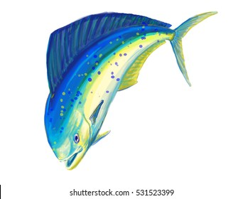 Dolphin fish or llampuga illustration on white background. A very famous and appreciated big game fish. Found in open seas, is a typical oceanic predator. Fishing techniques as trolling are the best.