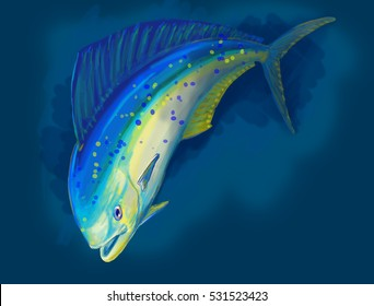 Dolphin fish or llampuga illustration on blue background. A very famous and appreciated big game fish. Found in open seas, is a typical oceanic predator. Fishing techniques as trolling are the best.