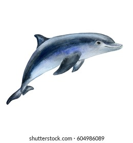 Dolphin. Realistic watercolor painting. Isolated over white background. Picture. Image