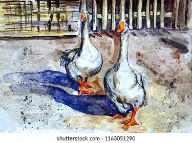 Domestic geese walk in the yard. Drawing watercolor on paper. Naive Art. Abstract art. Painting watercolor on paper.