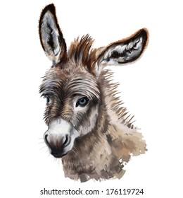donkey head digital painting/ donkey head