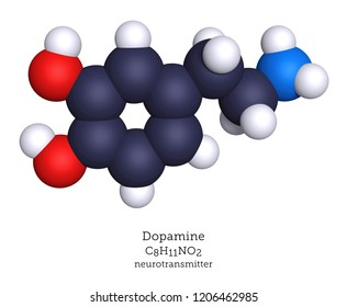 Dopamine is a neurotransmitter that modulates biochemical pathways, primarily in the brain. Dopamine release is associated with pleasure and reward stimuli.
