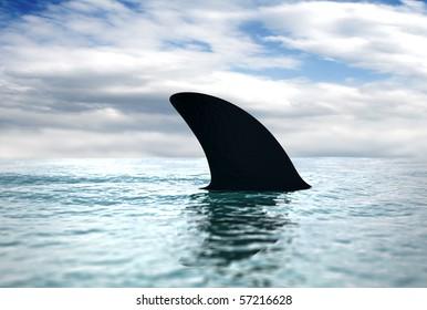 dorsal shark fin cuts through the water surface