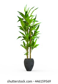 Bamboo Plant Images, Stock Photos & Vectors | Shutterstock