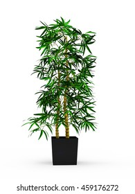 bamboo plant images stock photos vectors shutterstock