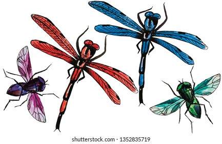 dragonfly fly colored watercolor drawing sketch summer insects flying