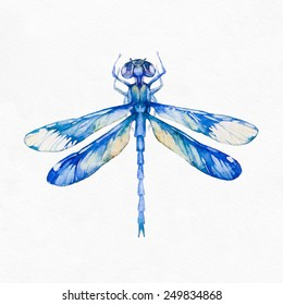 Dragonfly insect isolated on white background. Watercolor illustration.