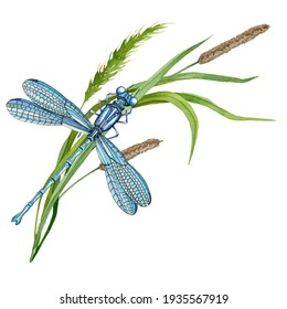 Dragonfly on green grass. Hand drawn watercolor illustration. Elegant insect and wild meadow herbs. Blue dragonfly and grass spikelets