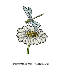 dragonfly over daisy flower color sketch engraving raster illustration. T-shirt apparel print design. Scratch board imitation. Black and white hand drawn image.