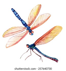 Dragonfly set. Watercolor illustration