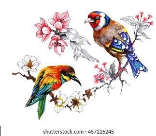 Drawing of beautiful bright birds and flowers pattern on white background