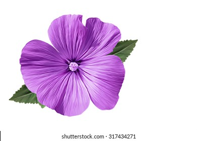 Drawing beautiful purple flower on a white background
