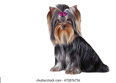 Drawing breed Yorkshire Terrier dog portrait on a white background