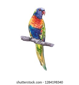 Drawing colorful parrot watercolor