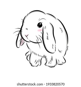 drawing cute holland lop bunny on white background