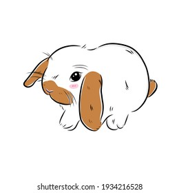 drawing cute hollandlop bunny on white background