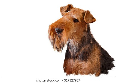 Drawing dog Airedale Terrier, portrait oil painting on a white background