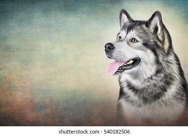 Drawing Dog Alaskan Malamute portrait oil painting on old vintage color grunge paper background