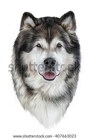 Drawing Dog Alaskan Malamute Portrait On Ilustración de ...