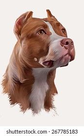 Drawing Dog American Pit Bull, portrait  oil painting on a white background