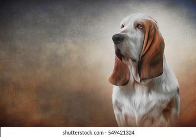 Drawing Dog Basset Hound portrait oil painting on old vintage color grunge paper background