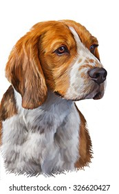 Drawing  Dog Beagle portrait oil painting on white background