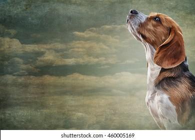 Drawing  Dog Beagle portrait oil painting on old vintage color grunge paper background. Hand drawn home pet. Digital painting. stock llustration