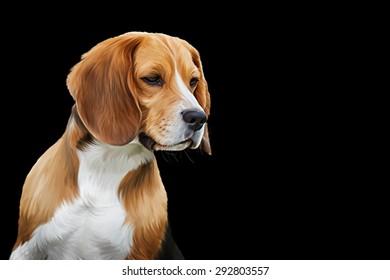 Drawing  Dog Beagle, portrait on a black background