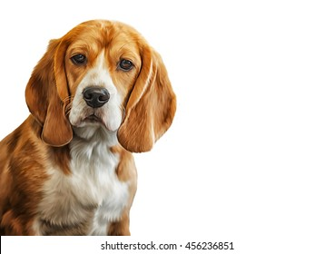 Drawing  Dog Beagle portrait on a white background. Hand drawn home pet. Digital painting. Rastr stock llustration
