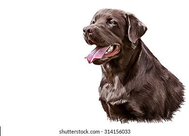 Drawing dog breed brown Labrador, portrait oil painting on a white background