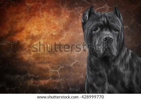 Drawing Dog Breed Cane Corso Portrait Stockillustration 428999770