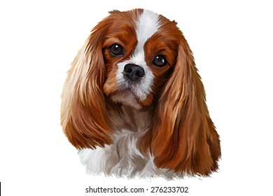 Drawing dog Cavalier King Charles Spaniel, portrait oil painting on a white background