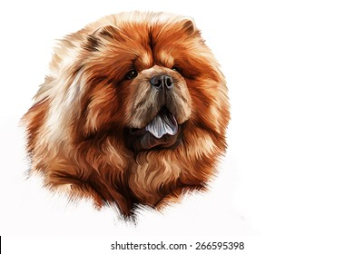 Drawing of the dog chow chow, red, portrait, Hand-drawn, oil painting on a white background
