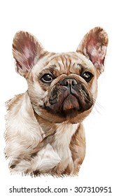 Drawing  dog French Bulldog, portrait oil painting on a white background