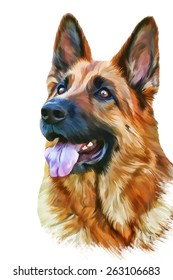 Drawing of the dog German Shepherd Dog, water color paints