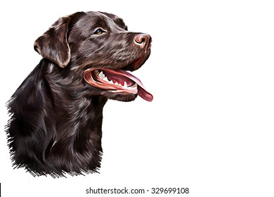 Drawing dog Labrador, portrait oil painting on white background